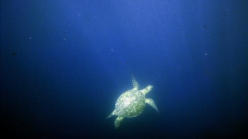 """A sea turtle off the """"Leon Dormido"""" rock - taken by me"""